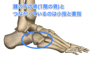 foot_structure1